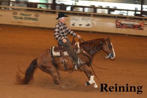 Larry.reining.stop.slideshow.jpg